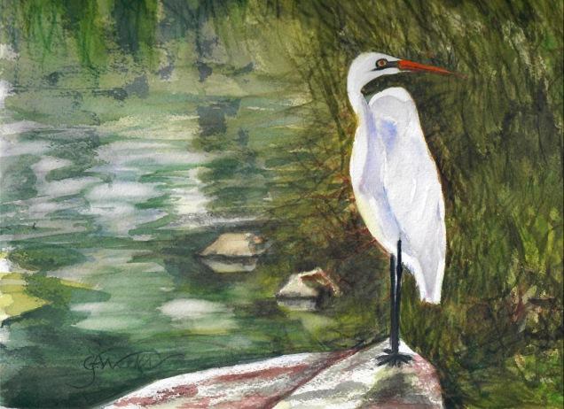 Egret wc 2