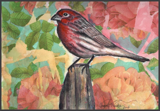 House finch w grey